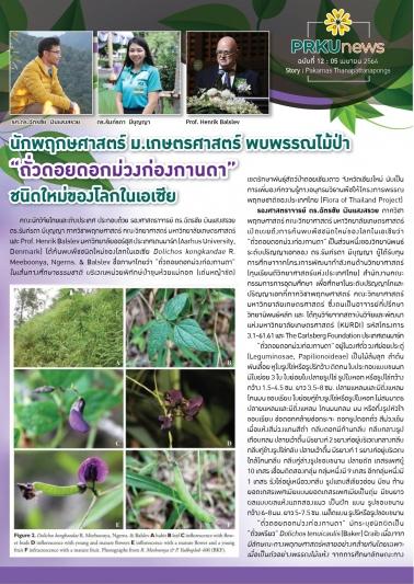 """นักพฤกษศาสตร์ ม.เกษตร พบพรรณไม้ป่า """"ถั่วดอยดอกม่วงก่องกานดา"""" ชนิดใหม่ของโลกในเอเซีย"""